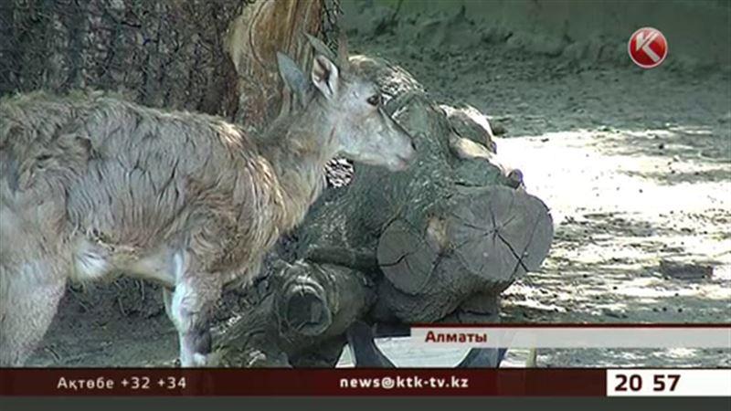 Алматы хайуанаттар бағы жаңа жануарлармен толықты
