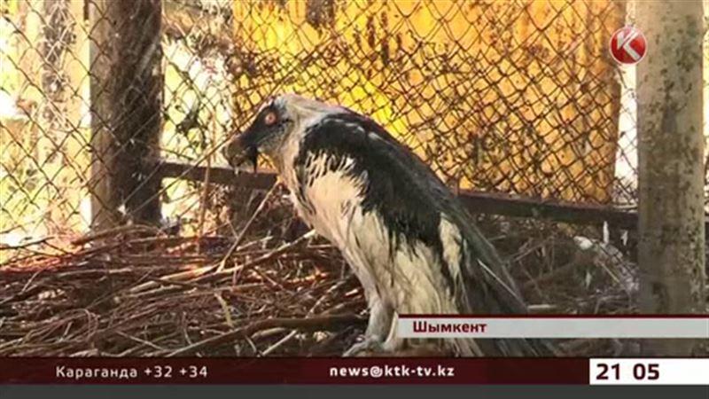 Жара ударила по обитателям шымкентского зоопарка