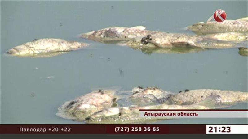Черноглазки гибнут в Атырауской области