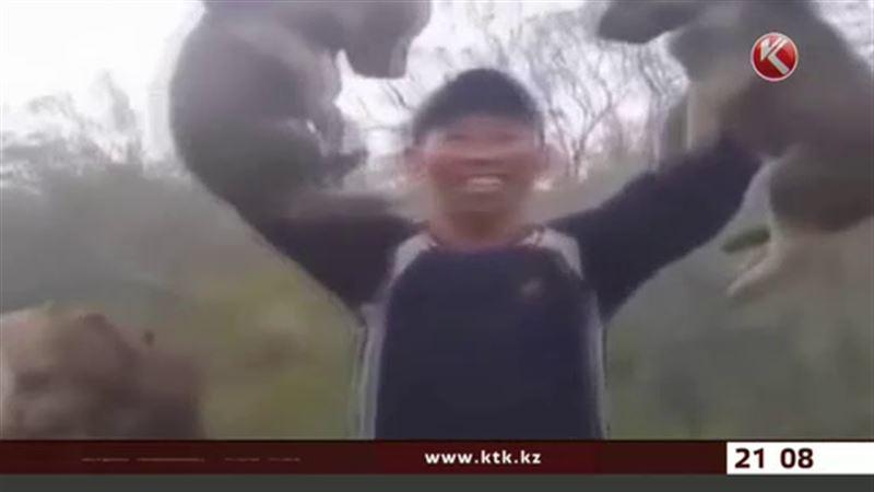Над волчатами издевались в Актюбинской области