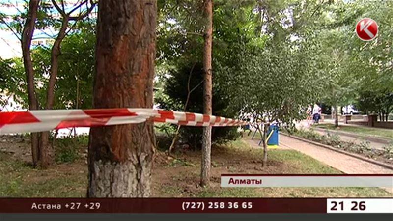 Новый проект может обернуться вырубкой деревьев в Алматы