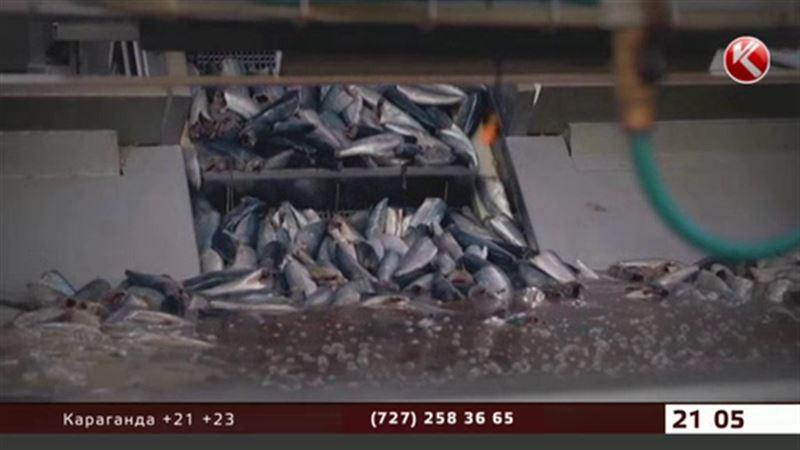 Казахстан запретил ввозить всю рыбную продукцию из Латвии и Эстонии