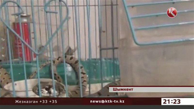 В Шымкенте змея пробралась в дом и съела домашнего любимца