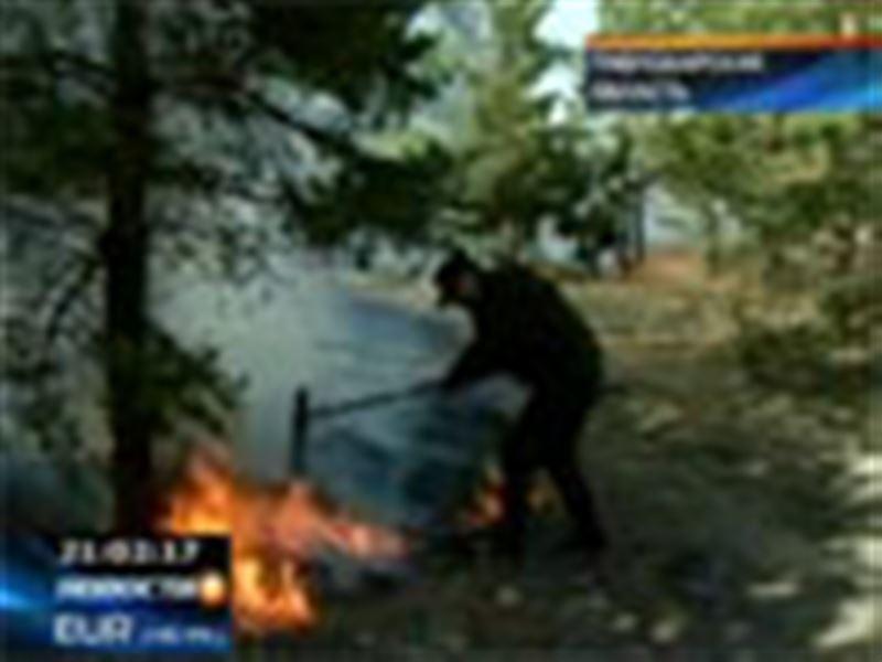 В Павлодарской области горит Шалдайский сосновый бор