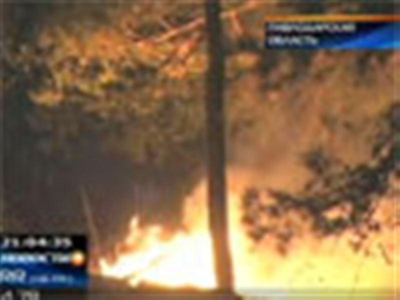 В Павлодарской области тушили крупный лесной пожар. В огне погибло шесть человек