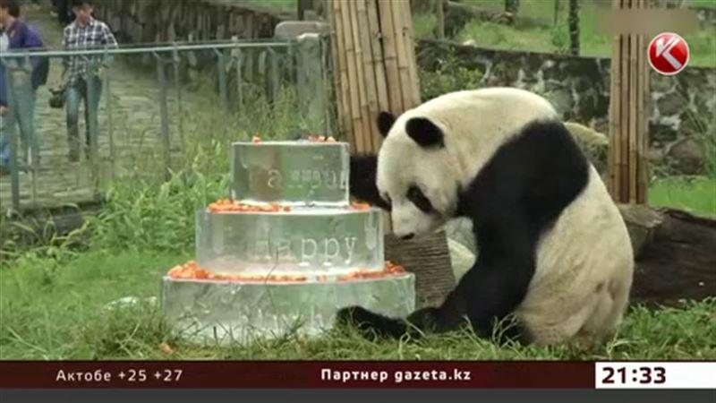 Старейшей панде преподнесли на юбилей ледяной торт