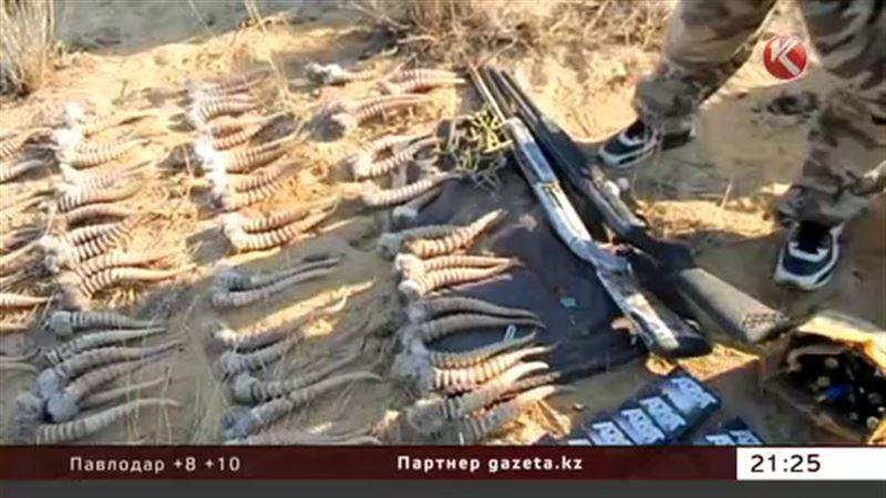 В Актюбинской области браконьеры убили 50 сайгаков