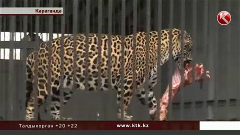 Обитатели карагандинского зоопарка в опасности