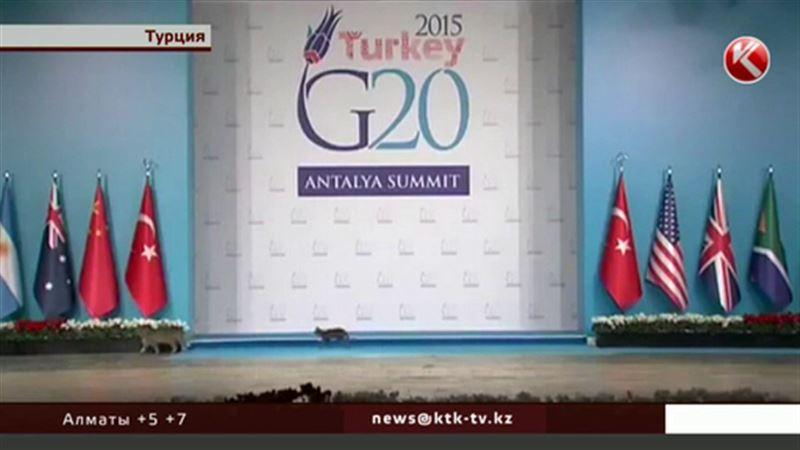 На саммите G20 изменилась повестка, и только кошки гуляют сами по себе