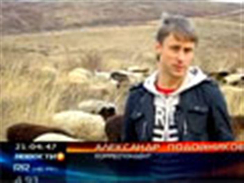 Псы атакуют! Один из районов Восточного Казахстана терроризируют бродячие собаки