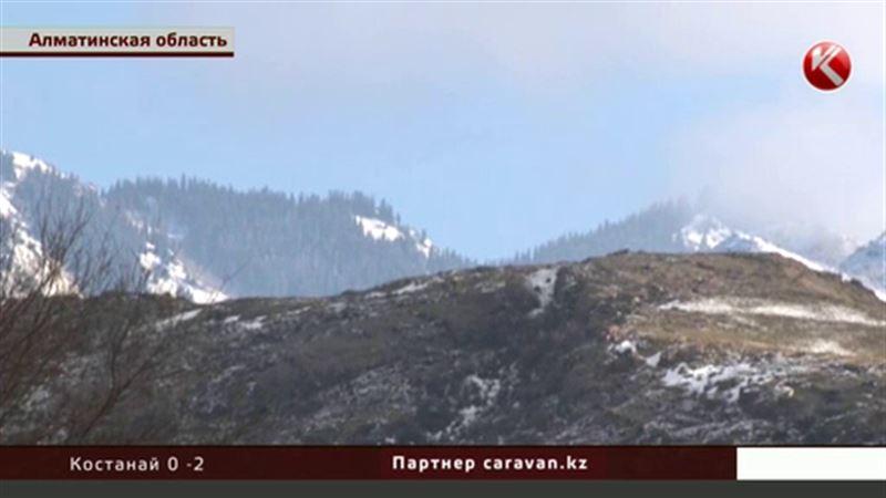 В Алматинской области выясняют, кто рубит реликтовый лес