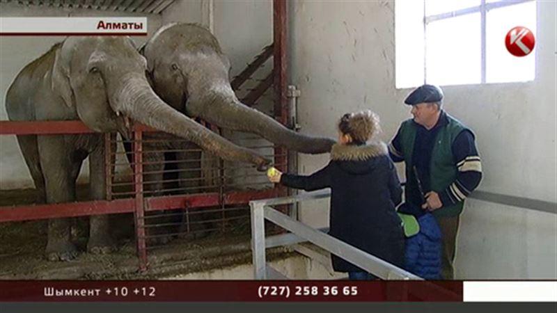 «Слоноуин»: праздник слонов в алматинском зоопарке
