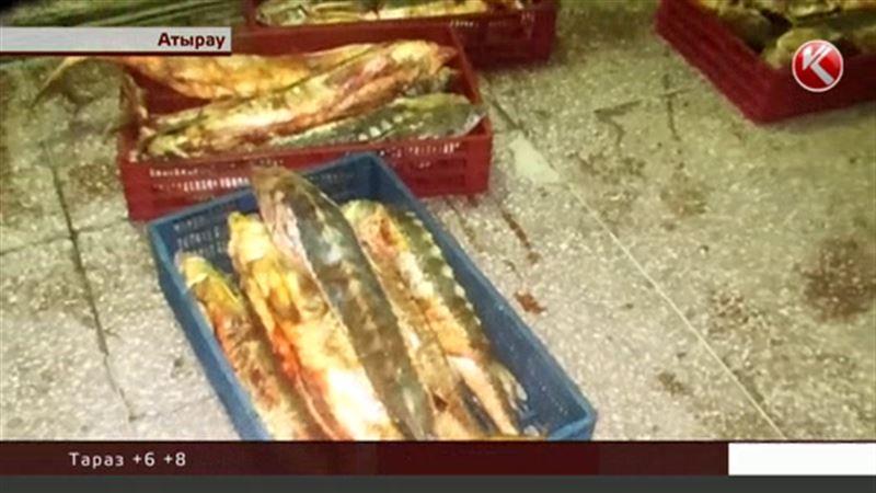 Триста килограммов осетрины нашли в багажнике