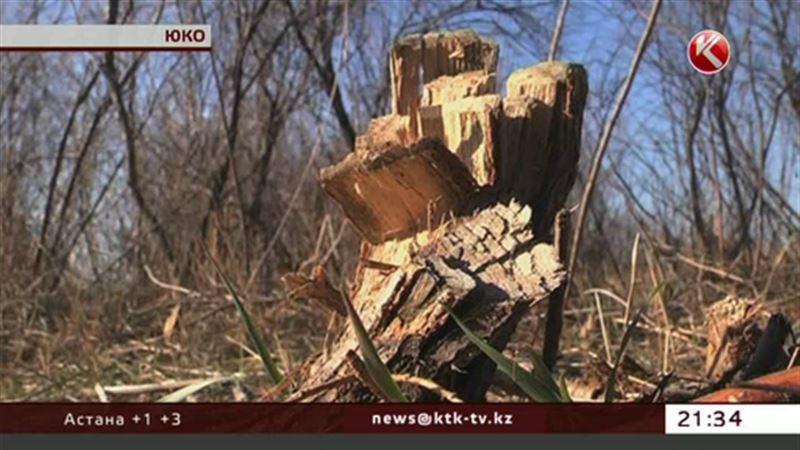 Обычный кустарник перессорил жителей Южного Казахстана