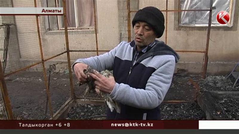 Больше сотни элитных голубей сгорели при пожаре в Алматы