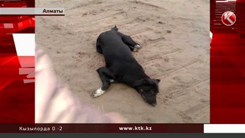 Зоозащитники требуют гуманных методов отлова бродячих собак