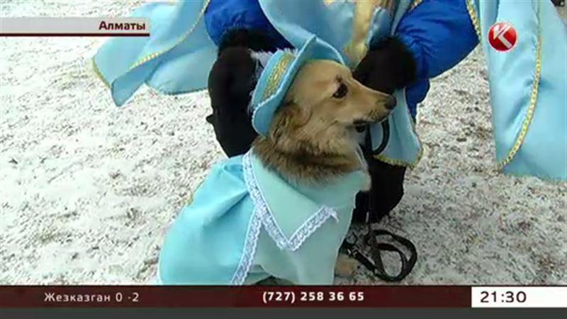 У алматинских собак прошел новогодний корпоратив