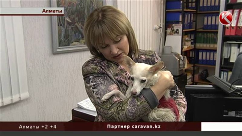 Алматинские тузики и мурки станут налогоплательщиками