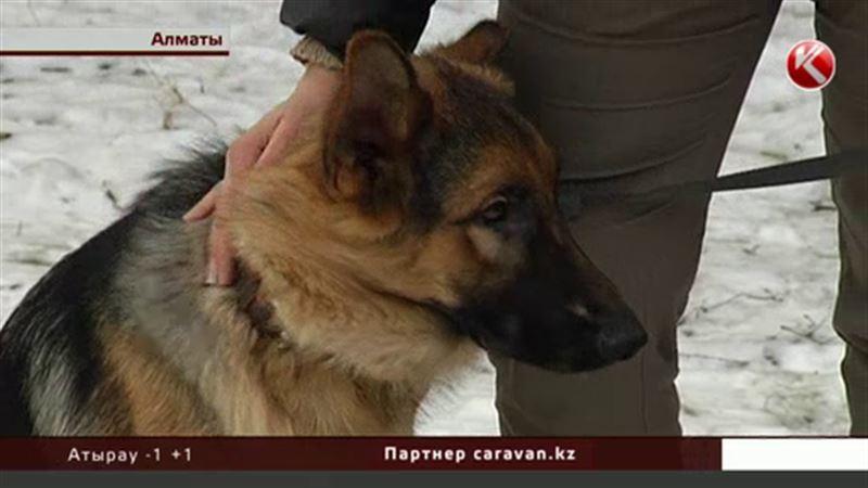 Власти Алматы пока не будут облагать налогом домашних животных