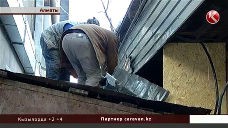 В Алматы устроили грандиозную спасательную операцию – вызволяли кошек