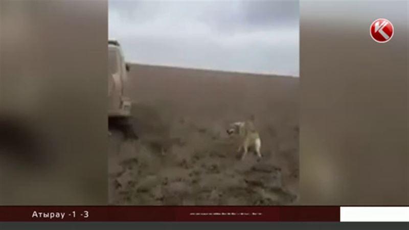 Жестокая расправа над волком шокировала казахстанцев