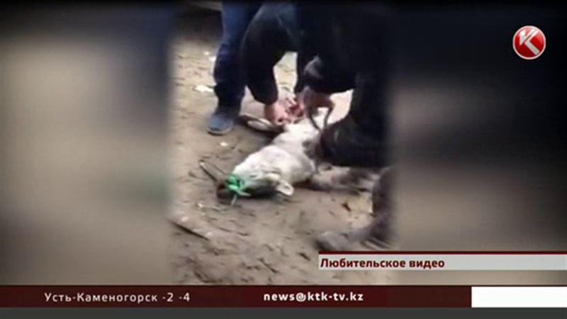 У жуткого видео, которое взбудоражило казахстанцев, появилось продолжение