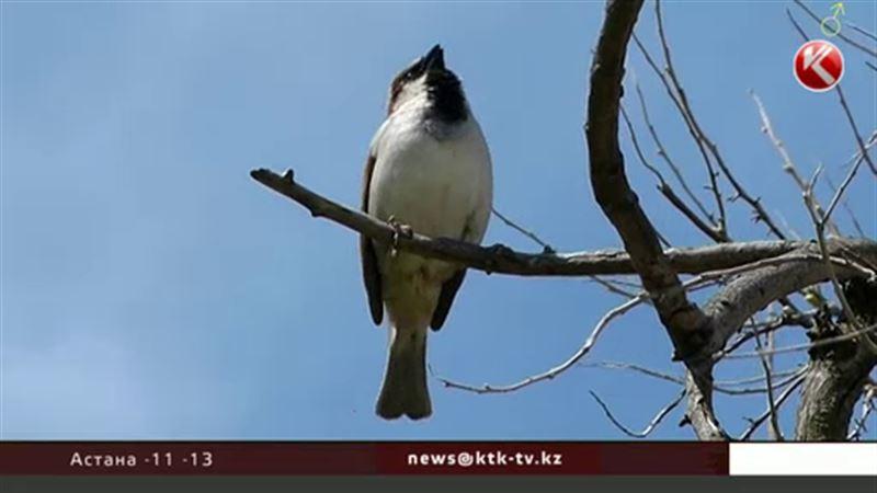 В Казахстане выбрали главную птицу года