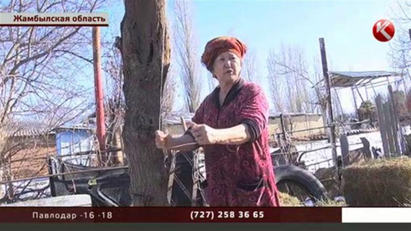 В Жамбылской области изнасиловали и повесили второклассника