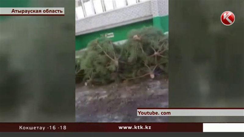 В Атырауской области высаживают срубленные ели