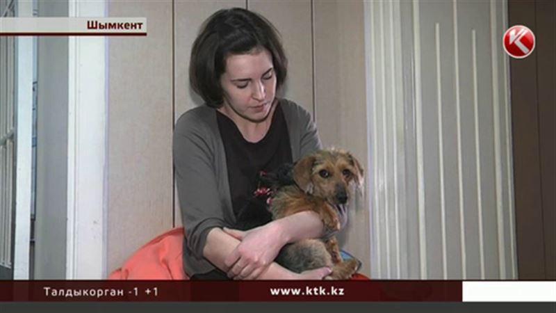 Шымкентцы помогли выжить брошенной собаке