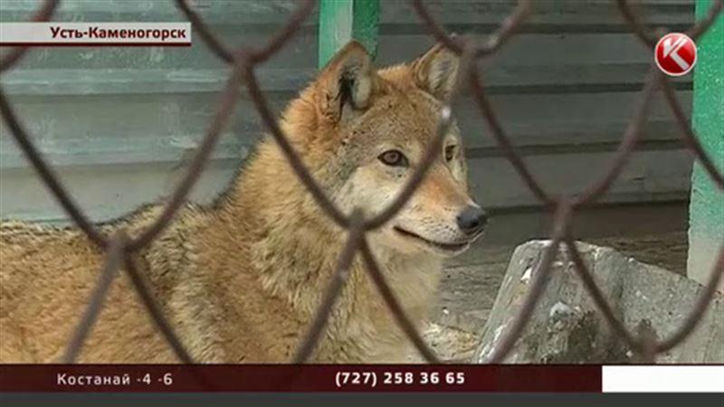 Настоящий бэби-бум случился в усть-каменогорском зоопарке