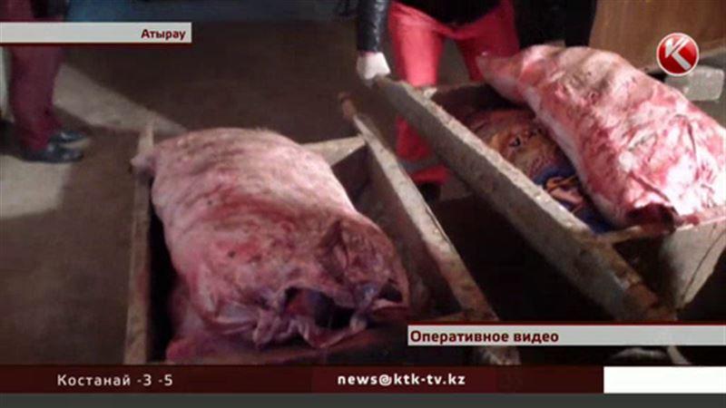 В Атырау задержали рекордную партию рыбы