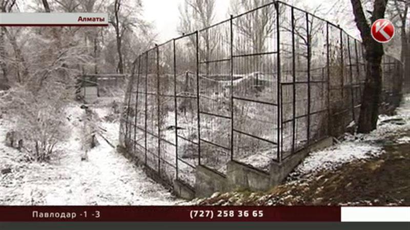 Исчезновением барсов из алматинского зоопарка заинтересовались прокуроры