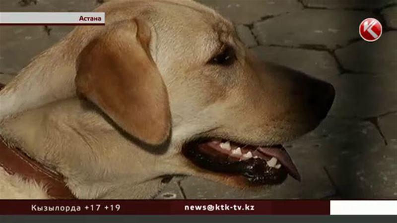 Для выгула собак теперь нужен паспорт, справка о прививках и контейнер для отходов