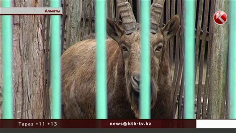 Неизвестные хотят убить животных в алматинском зоопарке