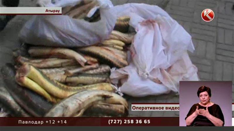 Атырауские полицейские нашли в багажнике 120 кило осетра