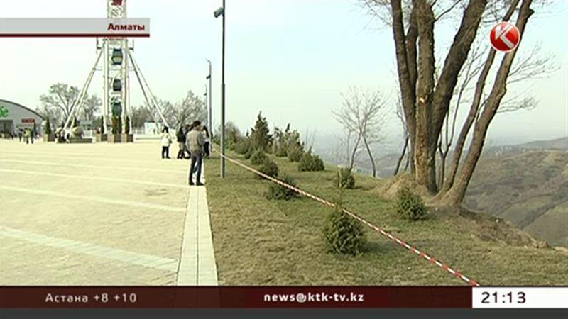 За вырубку 415 деревьев на Коктобе все-таки заплатят