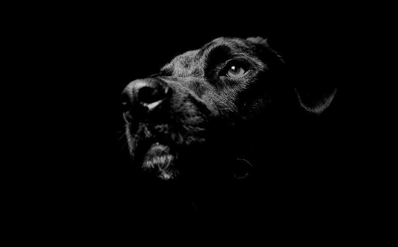 Кто виноват в том, что собаки убивают детей?
