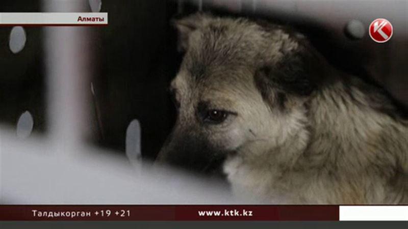 Девочку, которую накануне загрызли бездомные собаки, похоронили