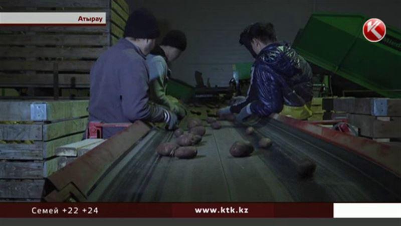 Бюджетники заявили, что их заставляют покупать гниющий картофель из стабфонда