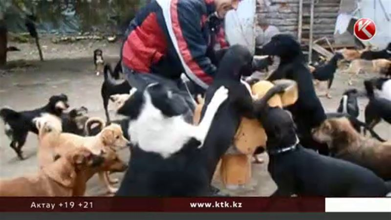 Белорусским собакам запретят лаять после одиннадцати