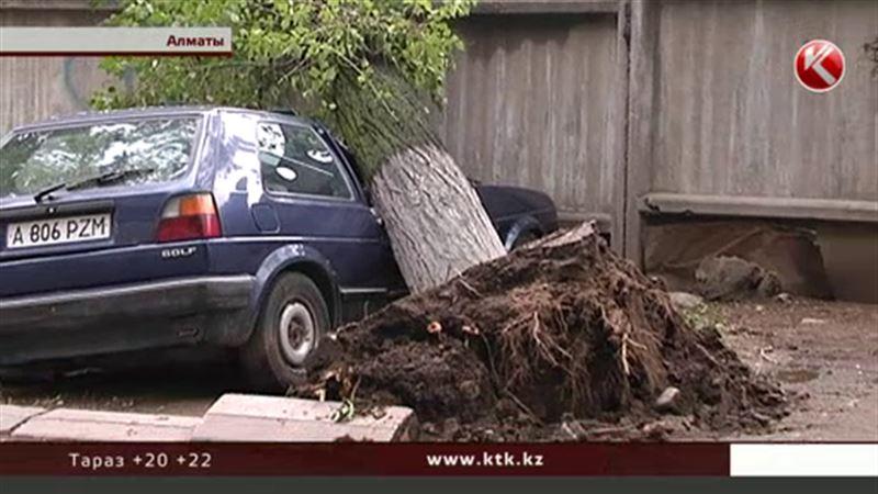 В Алматы рухнувшее дерево расплющило машину