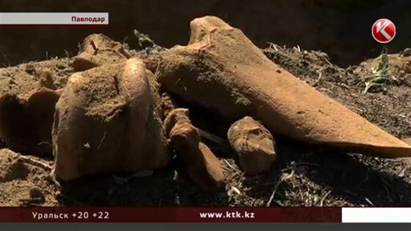 В павлодарском пригороде древнейшие останки обнаружили прямо перед частным домом