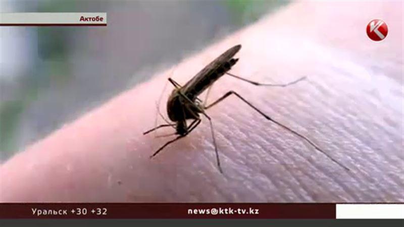В Актобе нашествие опасных комаров