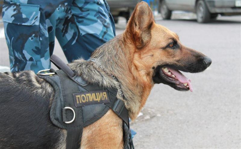 «Желтый» уровень угрозы: в метро Алматы работают кинологи