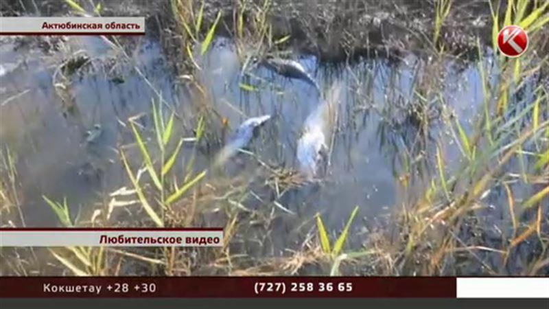 Над притоком Урала трупный запах, говорят рыболовы
