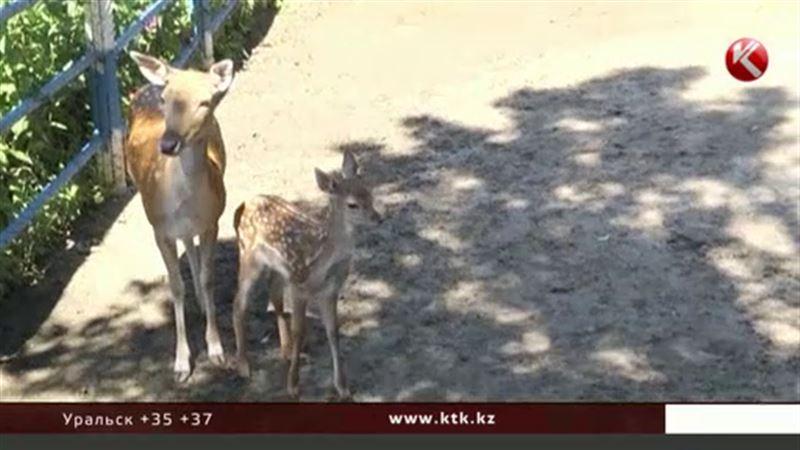В семейском биоцентре отмечали День оленя
