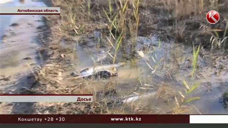 Россиянам запретили купаться из-за мора рыбы в Актюбинской области