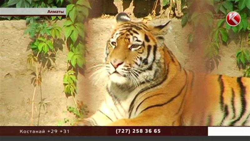 Алматинский зоопарк получил «полосатый» подарок от анонима