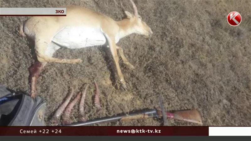 Рэмбо с рогами задержали в Западном Казахстане
